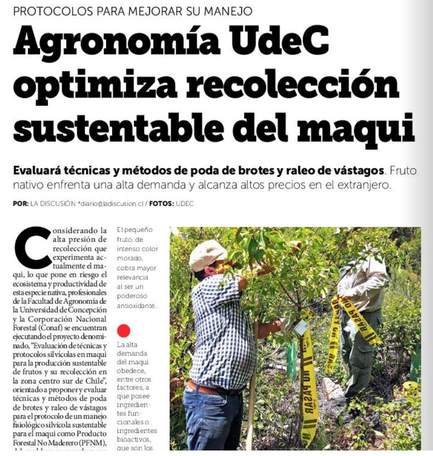 Equipo de Agronomía UdeC busca establecer protocolos para la producción y recolección sustentable del maqui