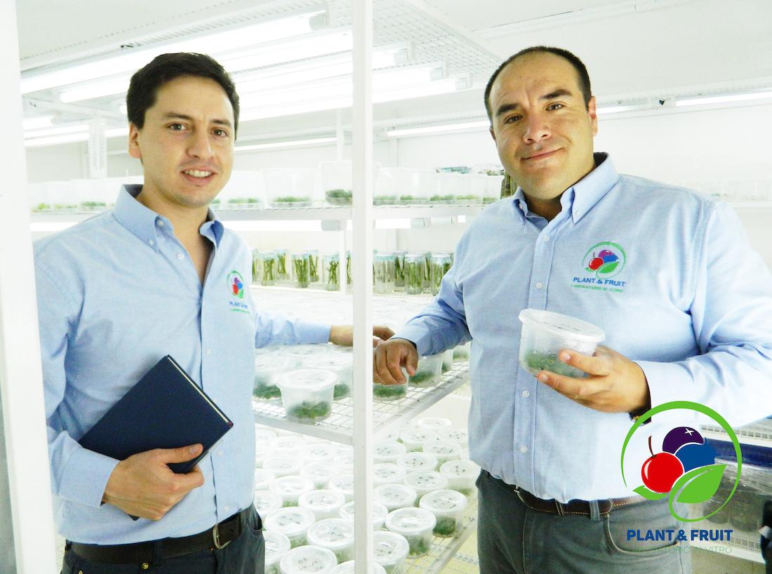 Egresados de Agronomía UdeC emprenden con laboratorio dedicado a la multiplicación clonal de plantas